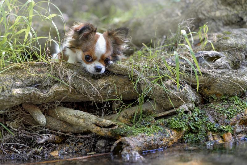 Σκυλί στο φως στον ποταμό στοκ φωτογραφία με δικαίωμα ελεύθερης χρήσης