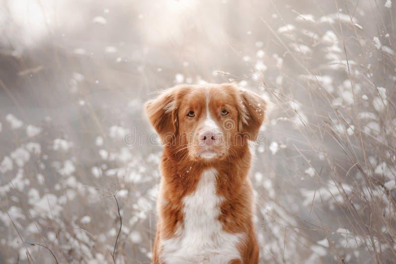 Σκυλί στο χιόνι σκυλί λίγος ποταμός σχεδιαγράμματος στοκ εικόνα με δικαίωμα ελεύθερης χρήσης