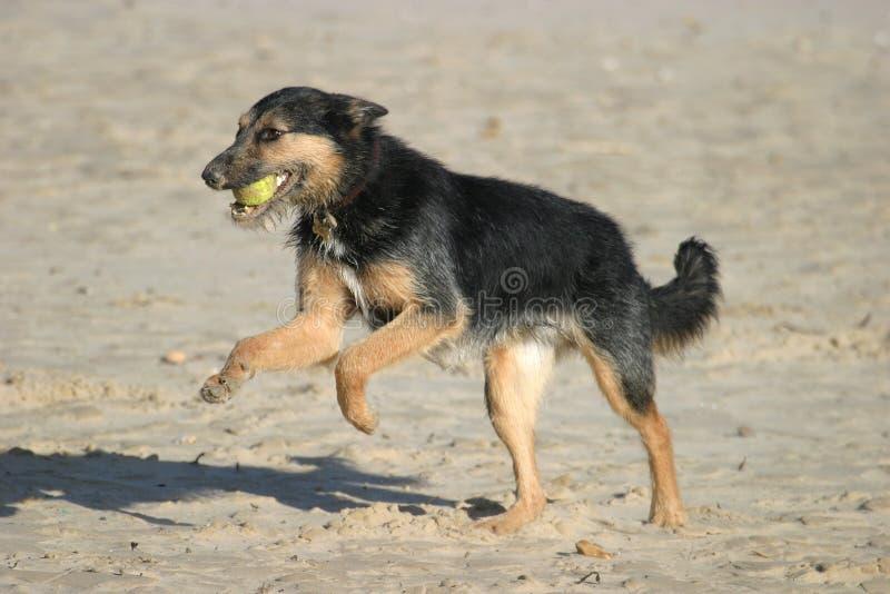 σκυλί σφαιρών Στοκ φωτογραφία με δικαίωμα ελεύθερης χρήσης