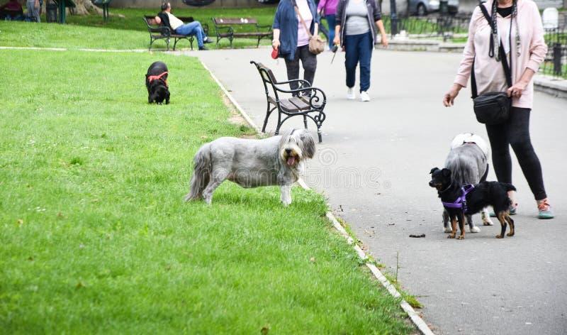 Σκυλί της Pet στο πάρκο στοκ εικόνες με δικαίωμα ελεύθερης χρήσης
