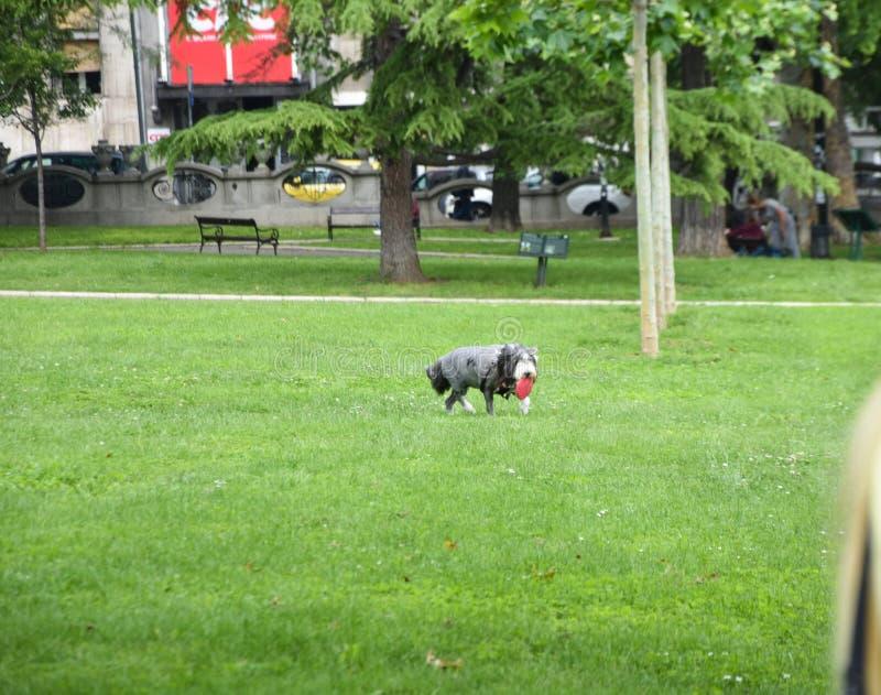 Σκυλί της Pet στο πάρκο στοκ φωτογραφίες με δικαίωμα ελεύθερης χρήσης