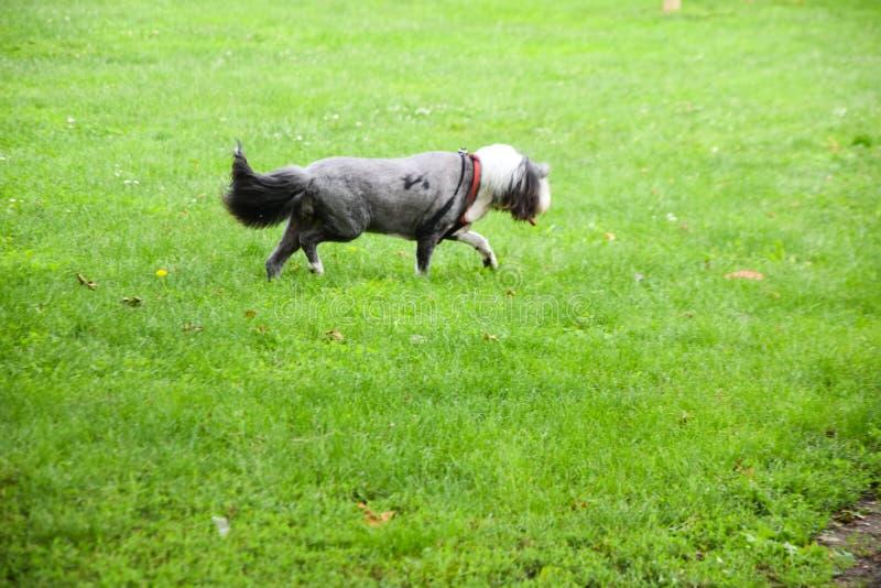 Σκυλί της Pet στο πάρκο στοκ εικόνα