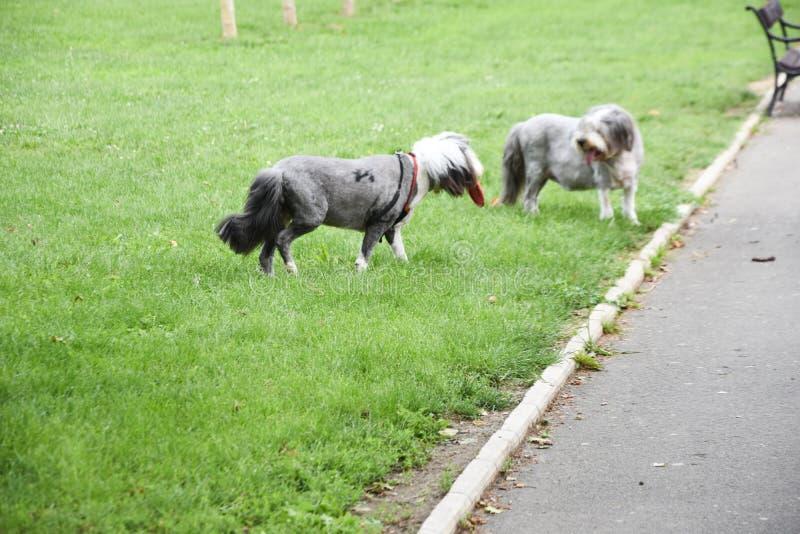Σκυλί της Pet στο πάρκο στοκ φωτογραφία