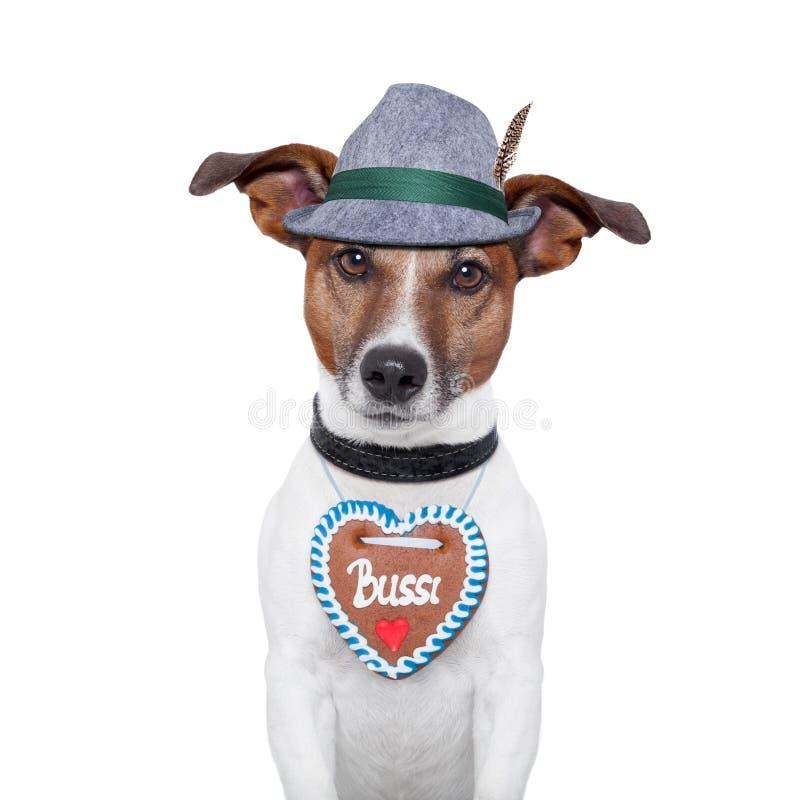 σκυλί το πιό oktoberfesτο στοκ φωτογραφίες με δικαίωμα ελεύθερης χρήσης