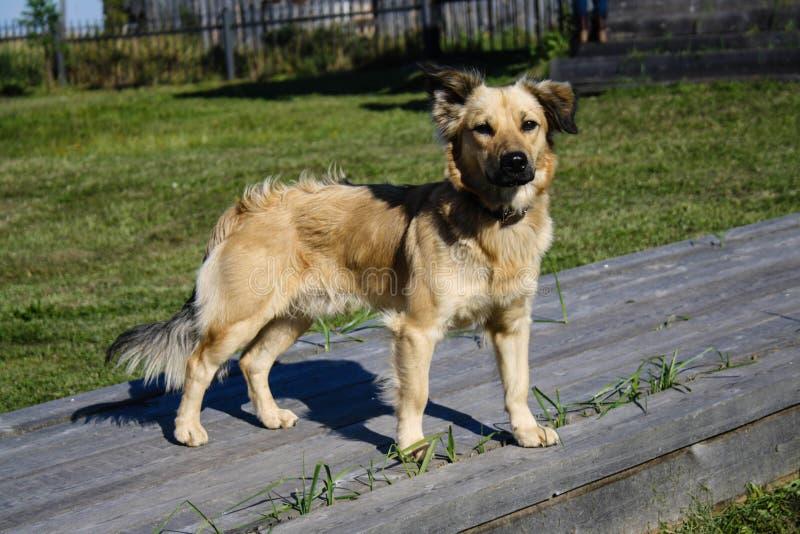 Σκυλί φθινοπώρου στοκ φωτογραφία με δικαίωμα ελεύθερης χρήσης