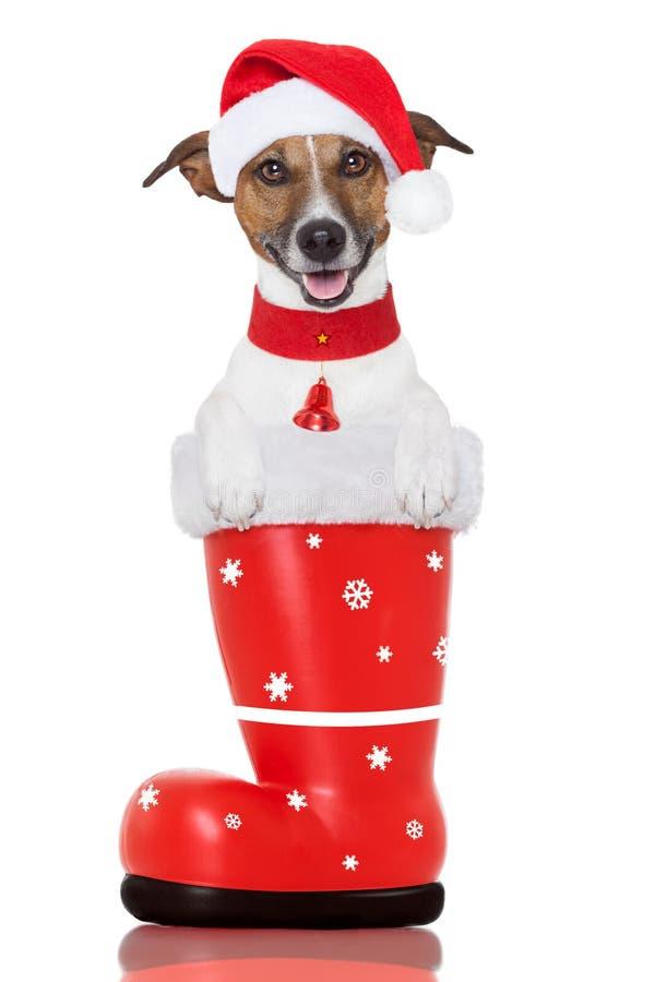 Σκυλί Χριστουγέννων σε μια κόκκινη μπότα santa στοκ φωτογραφία