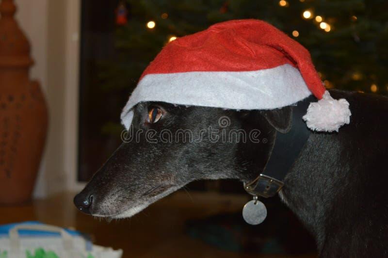 Σκυλί Christams στοκ εικόνα με δικαίωμα ελεύθερης χρήσης