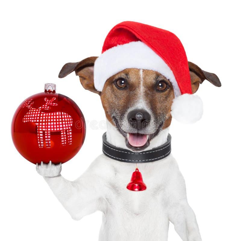 Σκυλί Santa με τη σφαίρα Χριστουγέννων στο πόδι στοκ εικόνες