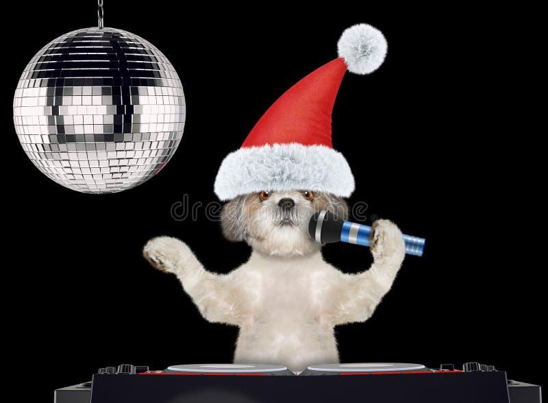 Σκυλί Shitzu στα καπέλα Χριστουγέννων που τραγουδούν με το μικρόφωνο ένα τραγούδι καραόκε Απομονωμένος στο Μαύρο στοκ φωτογραφίες με δικαίωμα ελεύθερης χρήσης