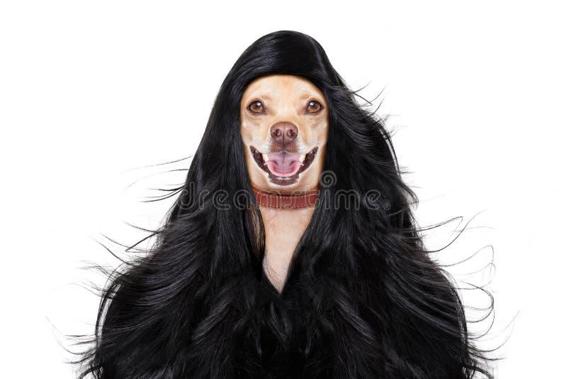 Σκυλί wellness spa στοκ φωτογραφίες με δικαίωμα ελεύθερης χρήσης
