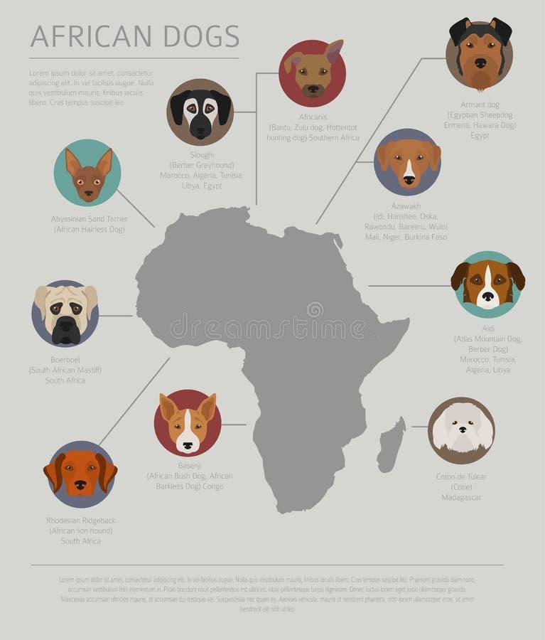 Σκυλιά από τη χώρα προέλευσης Αφρικανικές φυλές σκυλιών Infographic templ ελεύθερη απεικόνιση δικαιώματος