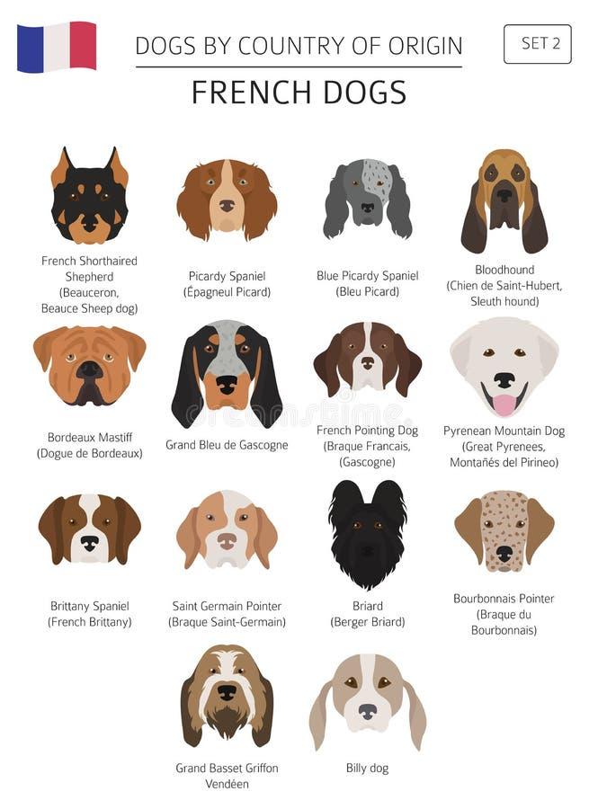 Σκυλιά από τη χώρα προέλευσης Γαλλικές φυλές σκυλιών Templa Infographic απεικόνιση αποθεμάτων