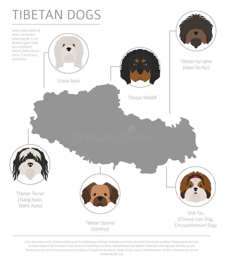 Σκυλιά από τη χώρα προέλευσης Θιβετιανές φυλές σκυλιών, κινεζικό βουνό ελεύθερη απεικόνιση δικαιώματος