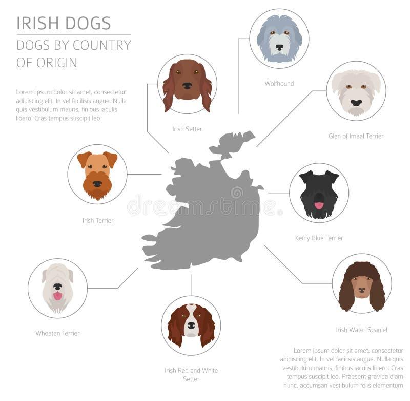 Σκυλιά από τη χώρα προέλευσης Ιρλανδικές φυλές σκυλιών Infographic templat απεικόνιση αποθεμάτων