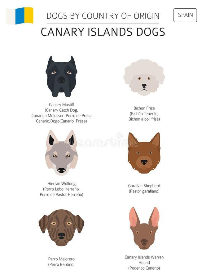 Σκυλιά από τη χώρα προέλευσης Ισπανία Φυλές σκυλιών Κανάριων νησιών INF διανυσματική απεικόνιση