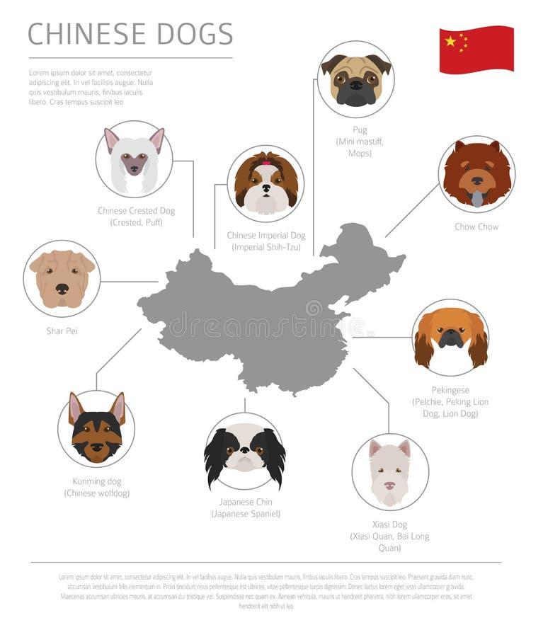 Σκυλιά από τη χώρα προέλευσης Κινεζικές φυλές σκυλιών Infographic templ διανυσματική απεικόνιση
