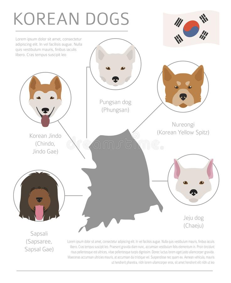 Σκυλιά από τη χώρα προέλευσης Κορεατικές φυλές σκυλιών Templa Infographic διανυσματική απεικόνιση