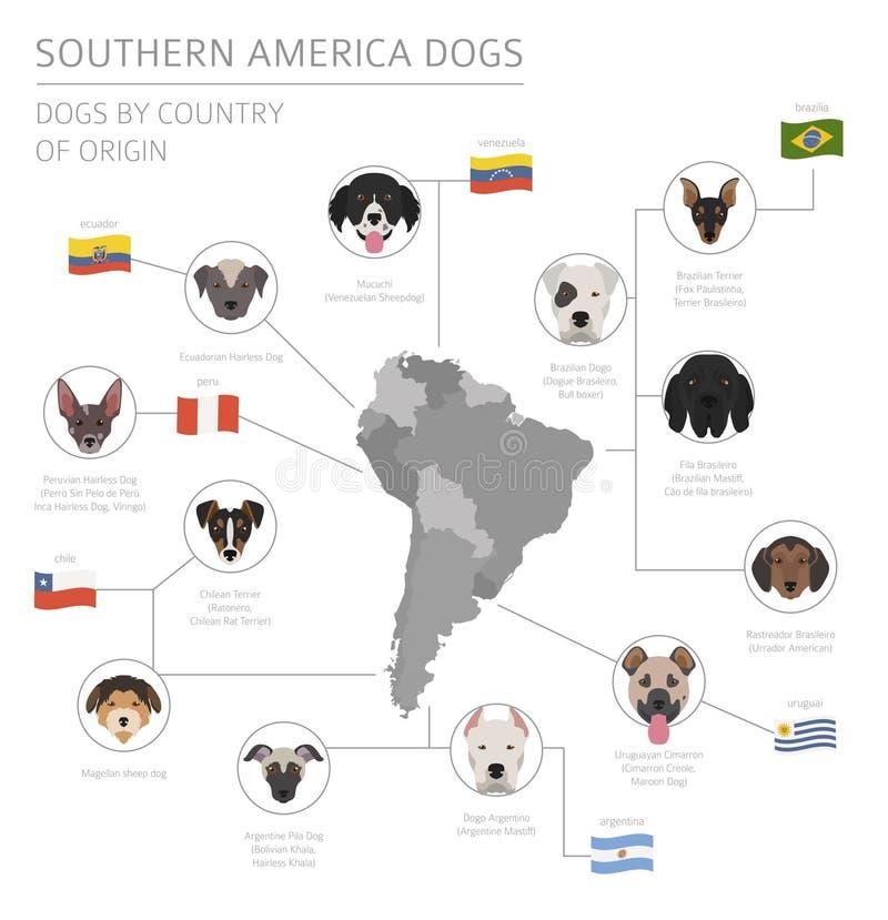 Σκυλιά από τη χώρα προέλευσης Λατινοαμερικάνικες φυλές σκυλιών Infographi διανυσματική απεικόνιση
