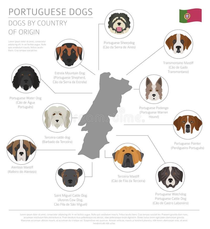 Σκυλιά από τη χώρα προέλευσης Πορτογαλικές φυλές σκυλιών Infographic te ελεύθερη απεικόνιση δικαιώματος