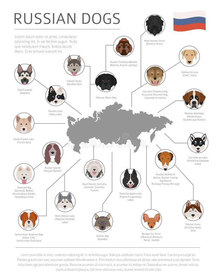 Σκυλιά από τη χώρα προέλευσης Ρωσικές φυλές σκυλιών Infographic templ απεικόνιση αποθεμάτων