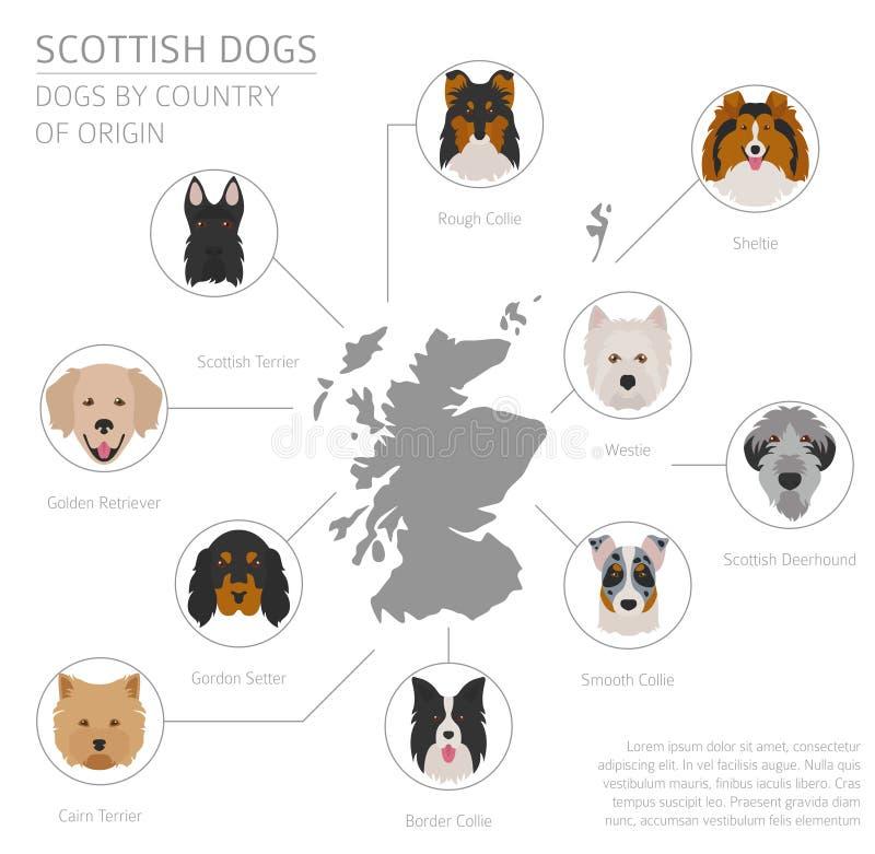 Σκυλιά από τη χώρα προέλευσης Σκωτσέζικες φυλές σκυλιών Temp Infographic διανυσματική απεικόνιση