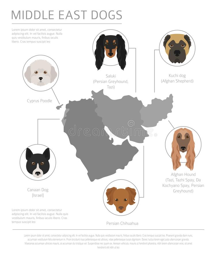 Σκυλιά από τη χώρα προέλευσης Φυλές σκυλιών Εγγύς Ανατολής, περσικά σκυλιά Ι ελεύθερη απεικόνιση δικαιώματος