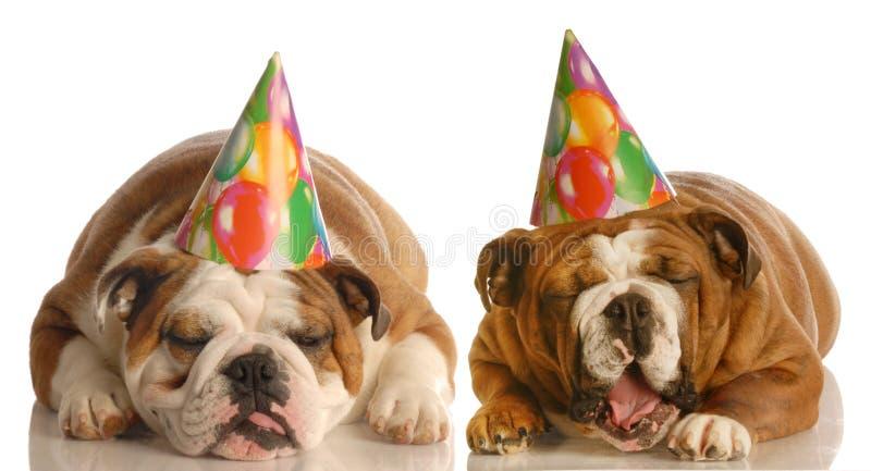 σκυλιά διατύπωσης παραπόνων γενεθλίων στοκ φωτογραφία