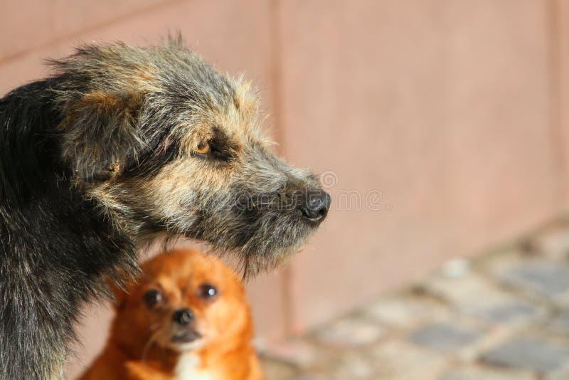 σκυλιά δύο στοκ εικόνες με δικαίωμα ελεύθερης χρήσης