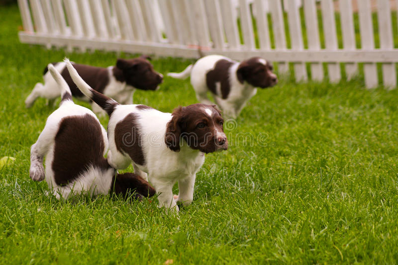 σκυλιά ευτυχή στοκ φωτογραφία με δικαίωμα ελεύθερης χρήσης