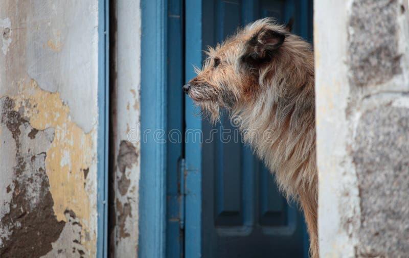 σκυλιά ημερών στοκ εικόνα