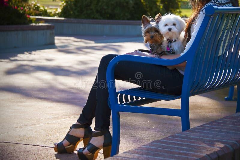 σκυλιά η γυναίκα δύο της στοκ φωτογραφία