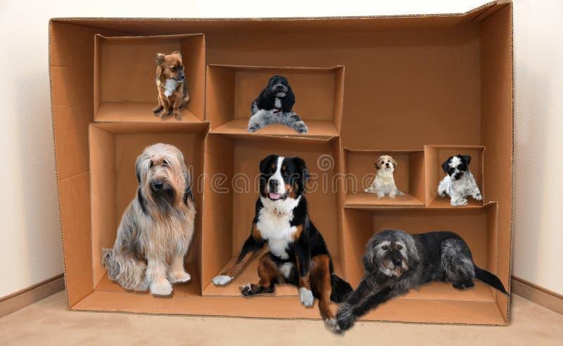 Σκυλιά σε ένα κινούμενο κιβώτιο στοκ εικόνες με δικαίωμα ελεύθερης χρήσης