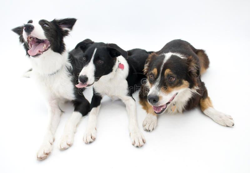 σκυλιά τρία ανασκόπησης λ& στοκ φωτογραφία με δικαίωμα ελεύθερης χρήσης