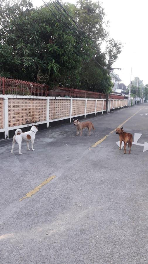 σκυλιά τρία στοκ φωτογραφίες με δικαίωμα ελεύθερης χρήσης