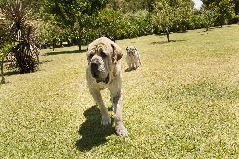 σκυλιά υπαίθρια δύο στοκ φωτογραφία