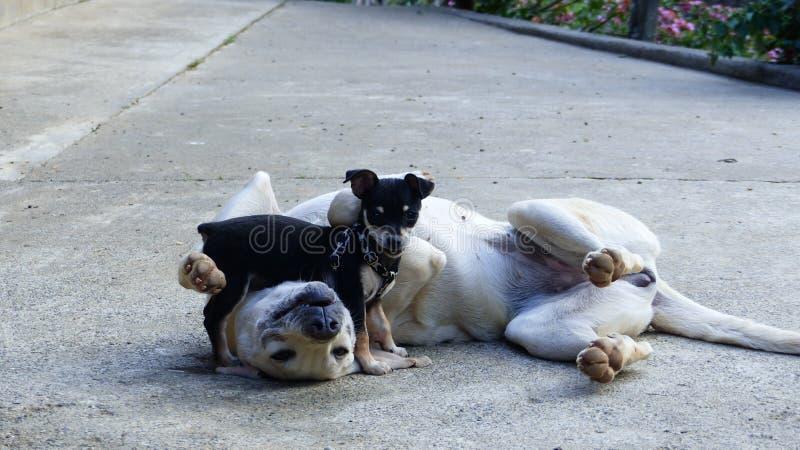 Σκυλιά φίλων στοκ φωτογραφία με δικαίωμα ελεύθερης χρήσης