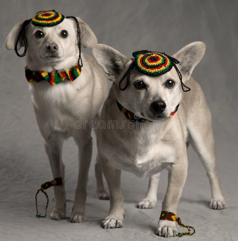 σκυλιά rastafarian στοκ φωτογραφία