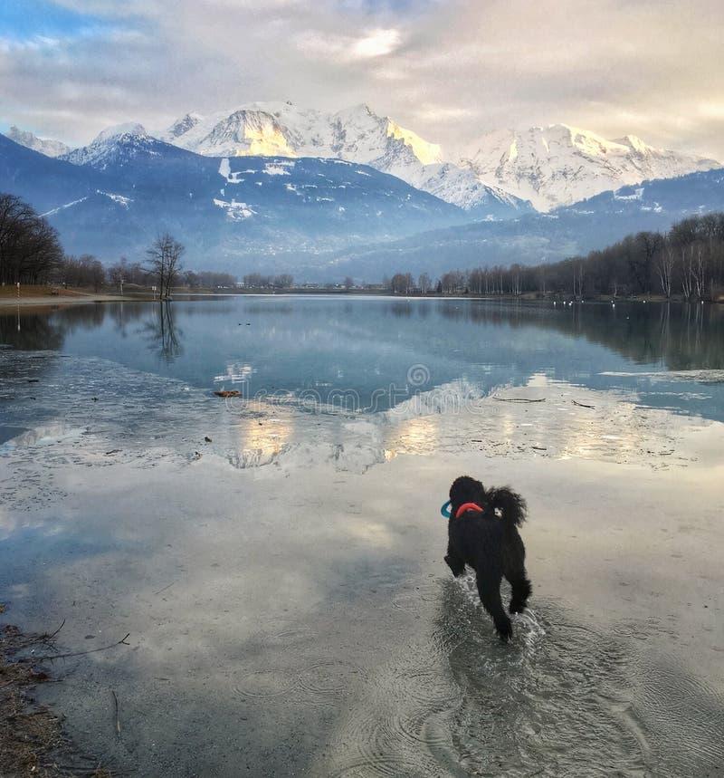 Σκυλιών προς τη Mont Blanc που απεικονίζεται στη λάκκα Passy στοκ εικόνες