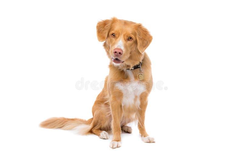 σκυλί λίγος ποταμός σχεδιαγράμματος στοκ εικόνα