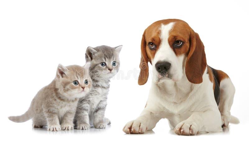 Σκυλί λαγωνικών συνεδρίασης στοκ εικόνα με δικαίωμα ελεύθερης χρήσης