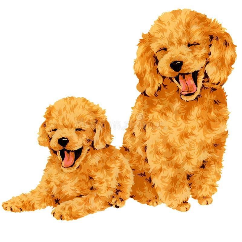 σκυλί αρκετά στοκ εικόνα με δικαίωμα ελεύθερης χρήσης