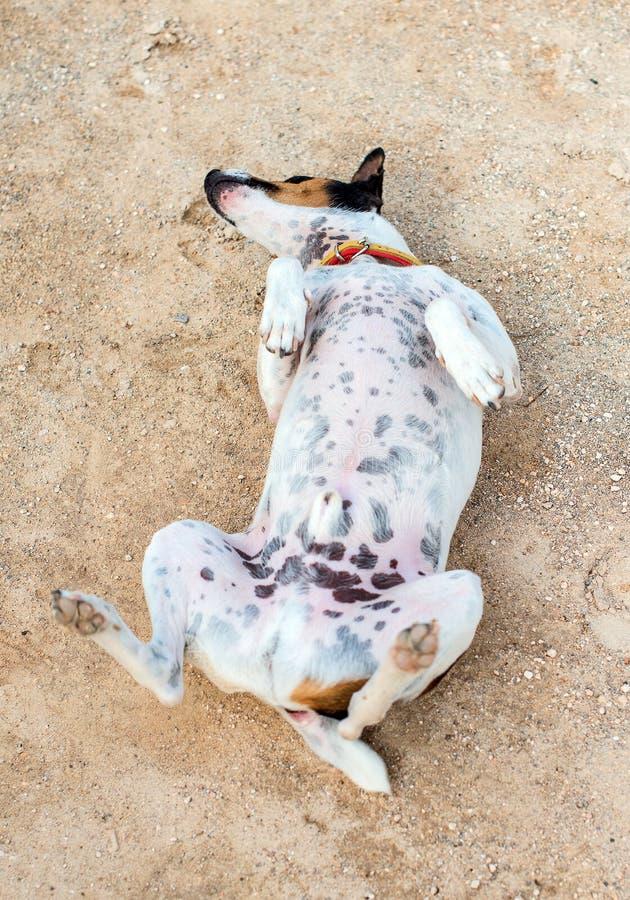 σκυλί αστείο λίγα στοκ φωτογραφίες