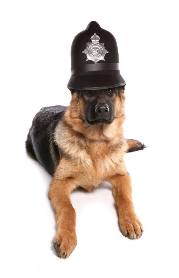 Σκυλί αστυνομίας στοκ εικόνες