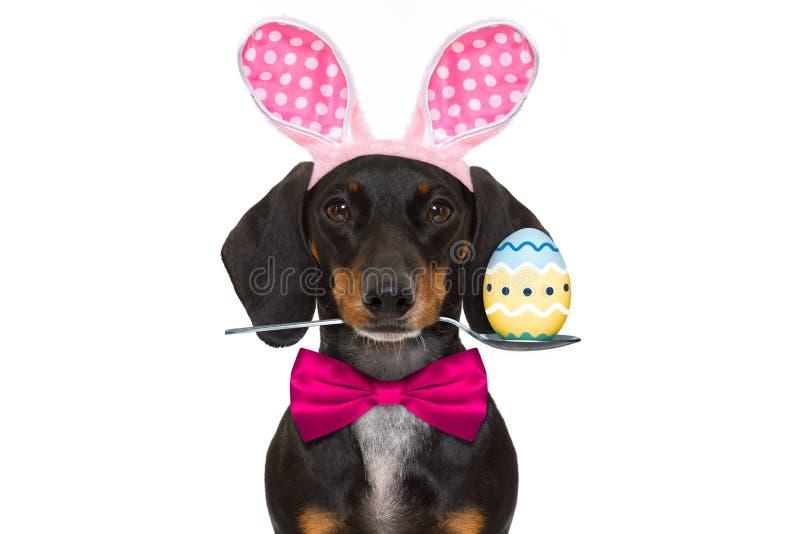 Σκυλί αυτιών Πάσχας λαγουδάκι στοκ εικόνες με δικαίωμα ελεύθερης χρήσης
