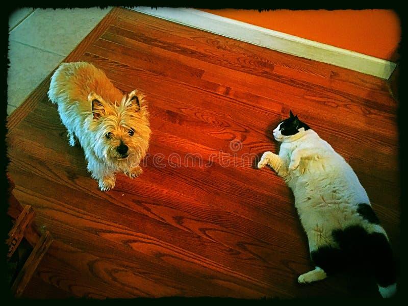 Σκυλί γατών &a στοκ φωτογραφία με δικαίωμα ελεύθερης χρήσης
