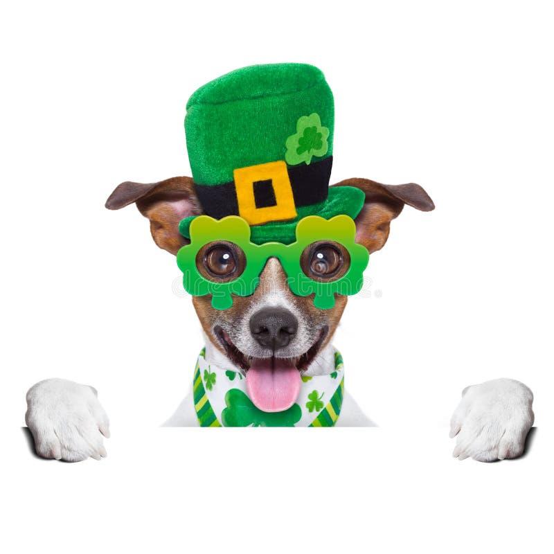Σκυλί ημέρας του ST patricks στοκ φωτογραφία