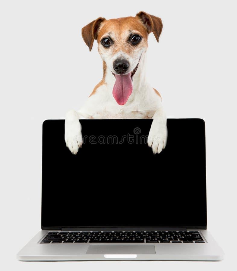 Σκυλί διευθυντών γραφείων με το μαύρο φορητό προσωπικό υπολογιστή οθόνης στοκ εικόνα