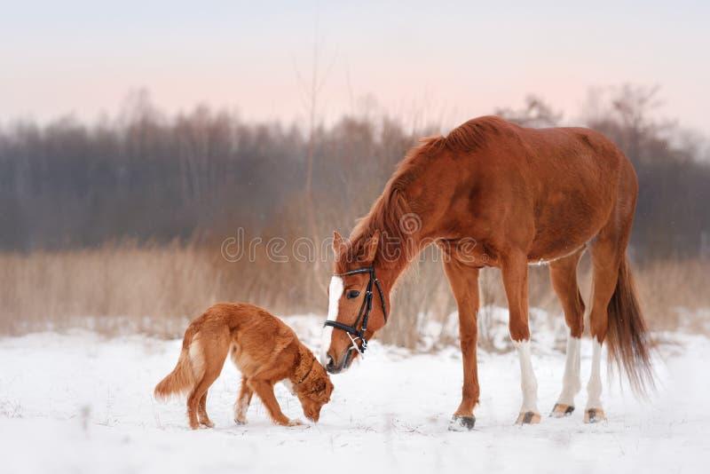 Σκυλί και άλογο υπαίθρια το χειμώνα στοκ φωτογραφίες