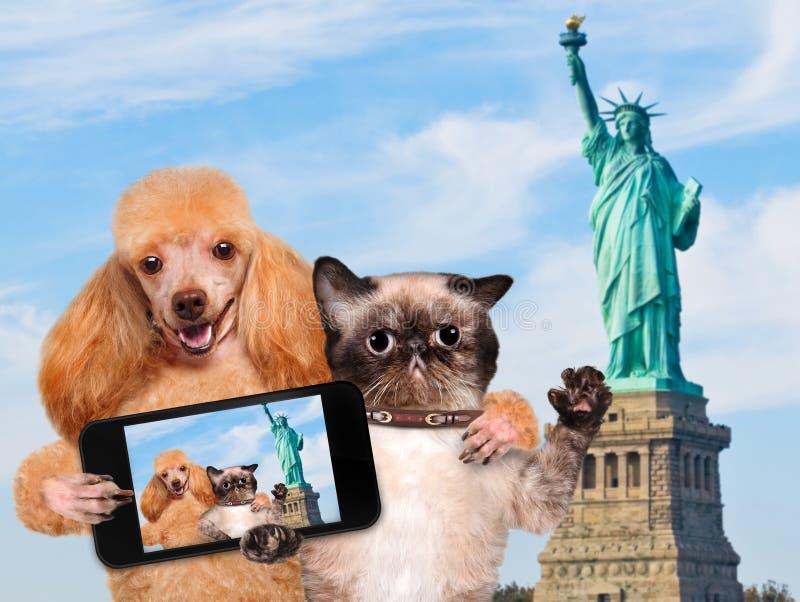 Σκυλί και γάτα μόνος-πορτρέτου στοκ εικόνα με δικαίωμα ελεύθερης χρήσης
