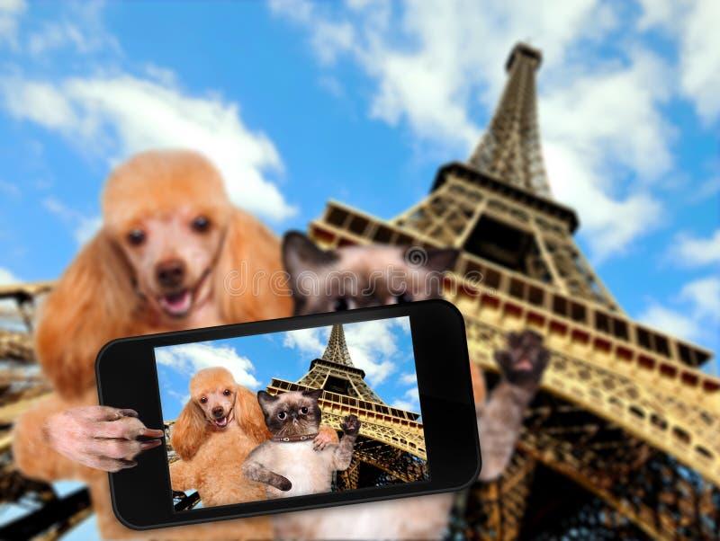 Σκυλί και γάτα μόνος-πορτρέτου στοκ εικόνες
